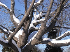 resting tree (dmixo6) Tags: winter light canada ice dark angles luminous icicles dugg dmixo6