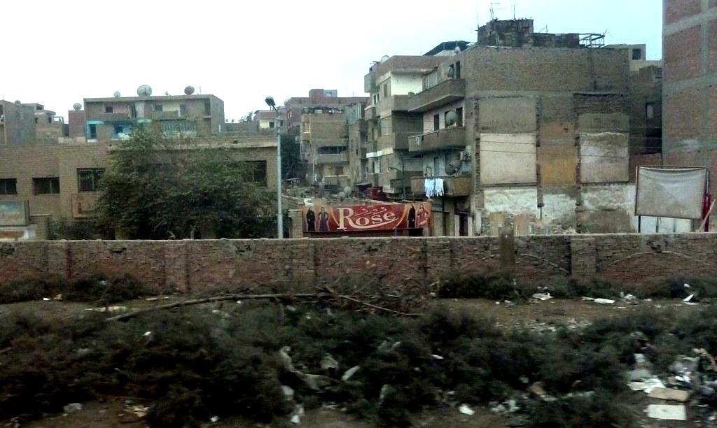 Egypt Rose 1