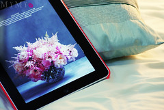 ♥ (M ï M ï) Tags: pink flower bed zoom song sony el arabic cover below 300 alpha mohamed ipad abdo amaken