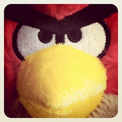 29/365 - Angry Bird With Early Bird Filter