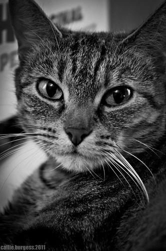Itty Bitty Kitty