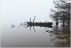 No Horizon Foggy Morning (Lane Rushing) Tags: morning tree water fog nikon availablelight shoreline d200 cypresstrees bigmomma lakescape 1755mm neutraldensityfilter natcheztraceparkway herowinner ultraherowinner thepinnaclehof storybookwinner rossbarnettereservoir ultraherochallenge shchofwinner halloffameplaces tphofweek97 pinmay11