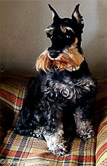 Ruth (Regina Waddington) Tags: dog brasil cachorro animaisdeestimao reginawaddington