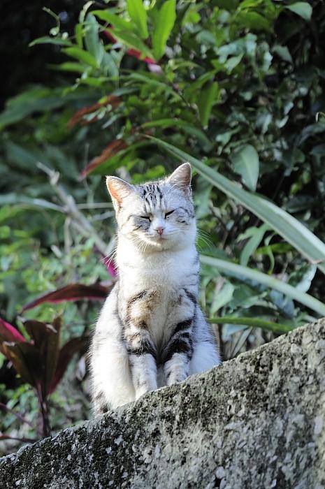 houtong-cat-street