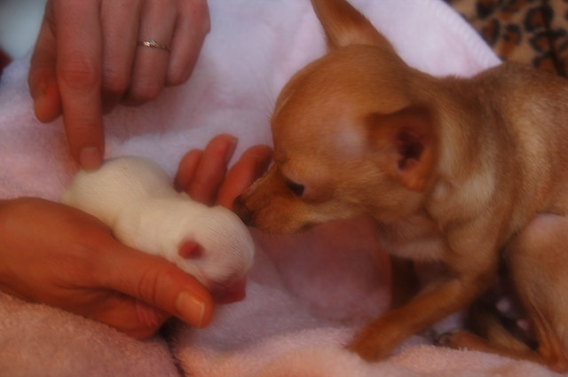 bambi and puppy3