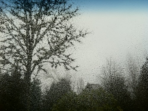 iPhone picture of trees through car windshield while it's raining