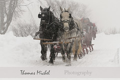 Sleigh Ride - Quebec Winter Carnival (Thomas Michel) Tags: carnival winter horses white snow canada landscape ride quebec top carnaval sled 80 sleigh thomasmichel