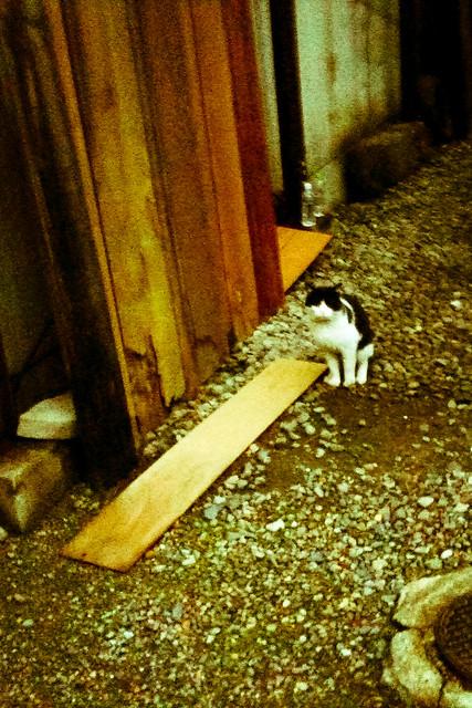 Today's Cat@2011-02-18