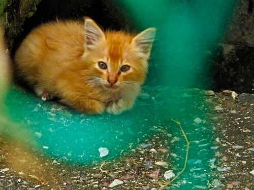 IMG_0881 Kitten