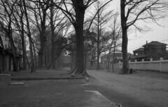 Hiratsuka Shrine () 1963 (asobist) Tags: monochrome japan tokyo shrine showa   kaminakazato   hiratsukajinja
