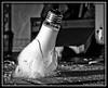 Fractured (Cygnus~X1 - Visions by Sorenson) Tags: winter blackandwhite bw usa white black broken glass lightbulb canon eos december unitedstates idaho explore tungsten shatter dropped explode cracked highspeed 2010 pocatello ef24105mmf4lisusm 5dmkii craigsorenson 20110224094645mdt