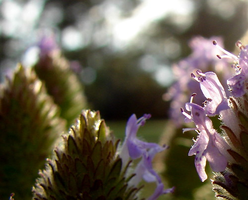 The grace gift of lavender wildflowers...