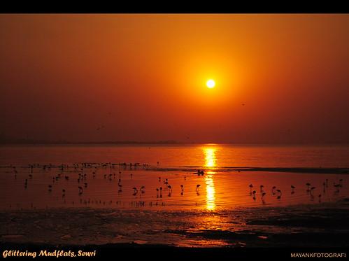 Mudflats of Sewri turn gold