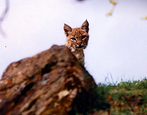 bobcat brian murphy wc