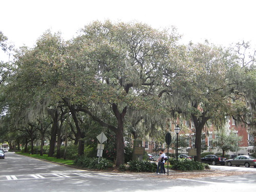 Trees in the Median