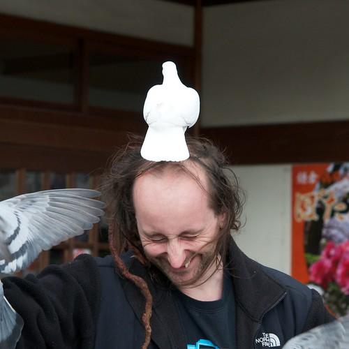 pigeon head