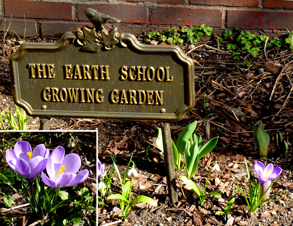 Earth School Growing Garden