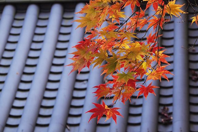 20101118_140239_當麻寺