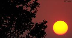 Rise (Pra's Artwork...) Tags: morning sun glory dew konkan ratnagiri