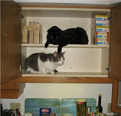 organize_your_cats_08