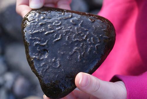 underside of a pebble