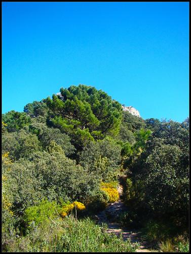 Pico de la cruz de Juanar (2)