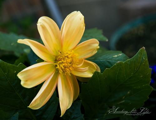 SpringFlowers_12