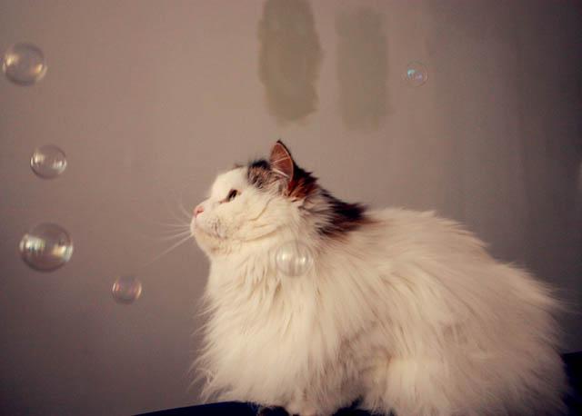 lou lou bubbles c