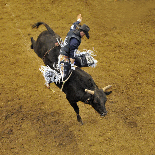 A professional bull rider keeps his ride under control