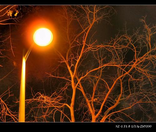夜拍路燈路樹