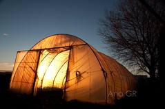 house of light and coziness (ana.gr.) Tags: sunset green love home nature vegetables farmhouse contrast gold golden soft natural farm grow atmosphere plastic lettuce homemade greenhouse organic agriculture contrejour lightanddark yellowlight invernadero organicfarming