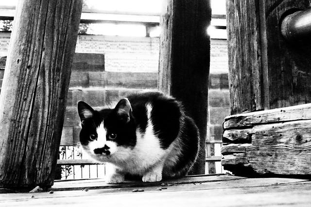 Today's Cat@2011-02-04