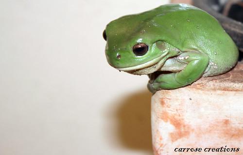 PAD 034 03.02.11 Frog