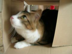 Time of boxes (Monja  con  patines) Tags: pet cute animal cat box kitty caja coco gata mascota