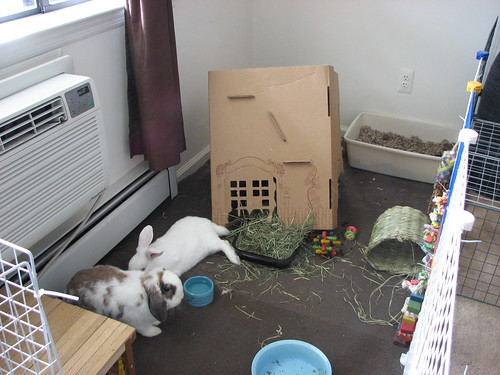 the cottontail cottage after a severe bunquake