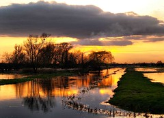 Fen Sunset (saxonfenken) Tags: trees sunset motif golden flood thumbsup fens cambridgeshire bigmomma gamewinner whittlesey 6983 a3b friendlychallenge thechallengefactory fotocompetitionbronze fotocompetitionsilver yourock1stplace agcgwinner herowinner ultraherowinner agcgmegachallengewinner pregamewinner pregamechallengewinner agcgcrèmedelacrèmewinner agcgcrèmeofthecropchallengewinner agcgdiamondheartwinner 6983sun