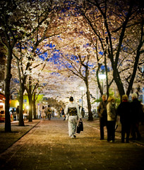 Kimono Under the Cherry Tree (Stuck in Customs) Tags: world travel trees people japan night cherry photography evening blog high kyoto asia dynamic stuck blossom path walk district candid photograph april  cherryblossoms kimono prefecture kansai range hdr trey travelblog customs 2010 honshu kyto  ratcliff okk honsh hdrtutorial stuckincustoms osakakobekyoto treyratcliff photographyblog kytofu stuckincustomscom  nikond3s