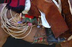 Pilchas norteñas (Eduardo Amorim) Tags: horses horse southamerica argentina caballo cheval caballos lazo cavalos pferde poncho cavalli cavallo gauchos pferd pampa riendas pala apero chevaux gaucho américadosul carona gaúcho norteño campero amériquedusud provinciadebuenosaires recado gaúchos sudamérica sanantoniodeareco suramérica américadelsur areco südamerika pilchas norteños tientos pilchasgauchas recao pampaargentina camperos americadelsud salteño americameridionale campeiros guardamonte campeiro guardamontes eduardoamorim peruvianhorse salteños peruvianhorses peruvianpasohorses peruvianpasohorse cojinillo caballodepasoperuano peyones pampaargentino asidera caballosdepasoperuano cavalosdepasoperuano chevauxpasopéruvien cavalodepasoperuano chevalpasopéruvien peleros sobrepeyón