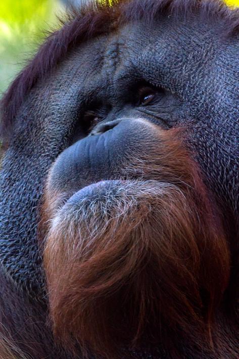 020611_zoo_animal01