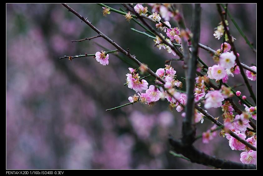 2011/02/18 中正紀念堂 Osawa 135mm f2.8 PK接環!