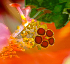 Hibiscus (karen and mc) Tags: abstract flower hawaii hibiscus hawaiistateflower theawardtree karenandmc