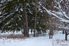 stritz-4092.jpg (jstritz) Tags: trees winter bench fhsp