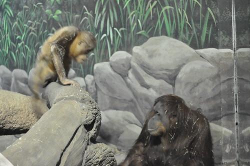 Mama & Baby Orangutan