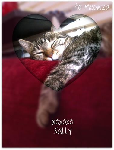 weekend cat blogging #300
