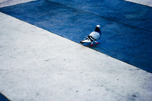 bird x sidewalk colors