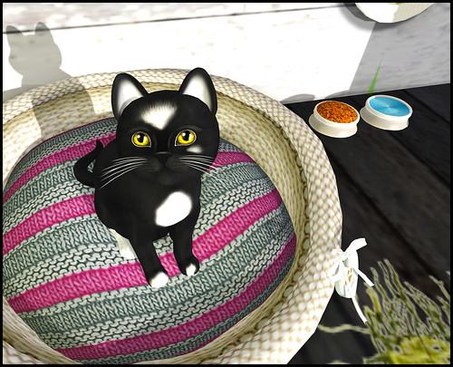 KittyCats - Magdalena