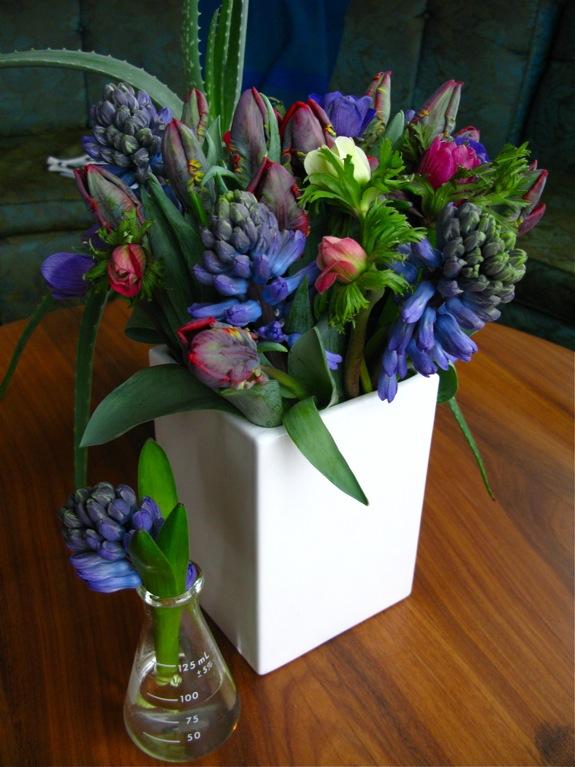 tulip hyacinth anemone flowers 001