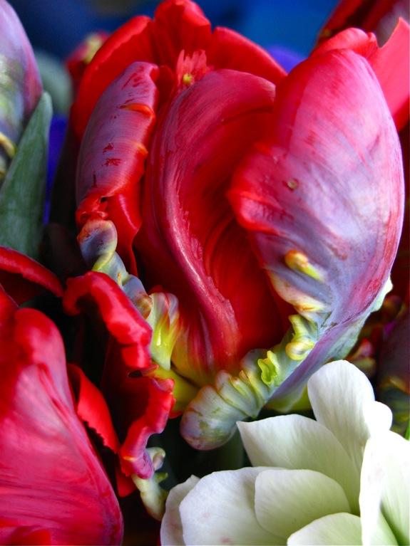 tulip hyacinth anemone flowers 006
