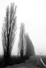 Trees in fog #3 (gianmi) Tags: trees winter bw italy color tree art nature fog alberi landscape blackwhite nikon italia country bn campagna cielo nebbia albero inverno photoart paesaggio biancoenero controluce backlighting madeinitaly d90 gianmichele nikond90 gianmi gianmichelepace