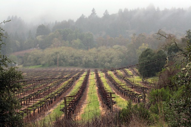 vineyard at jack london state park